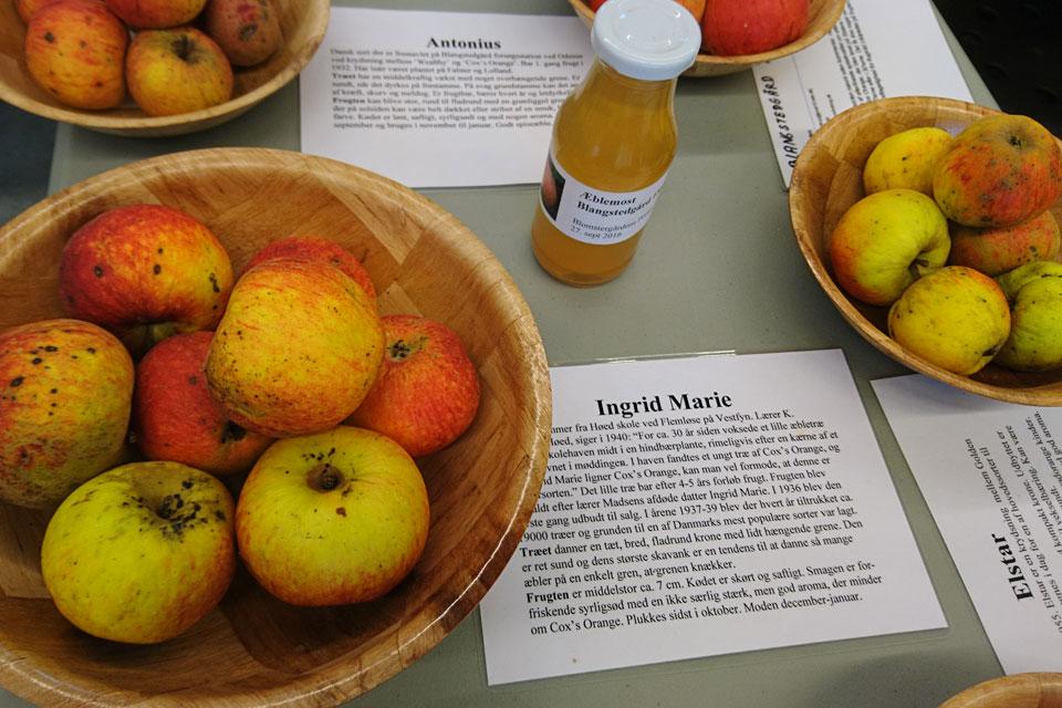Сорта яблок, Дания
