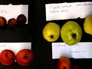 Узнать сорт яблок – мастер класс