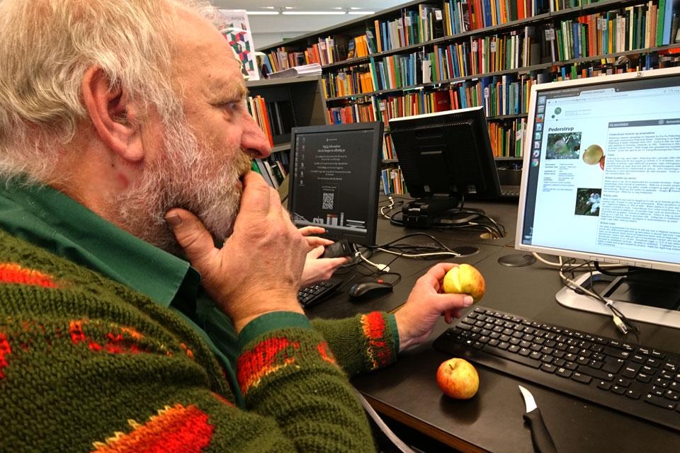 Вилли Моугорд (Villy Mougaard) изучает детали сорта яблока