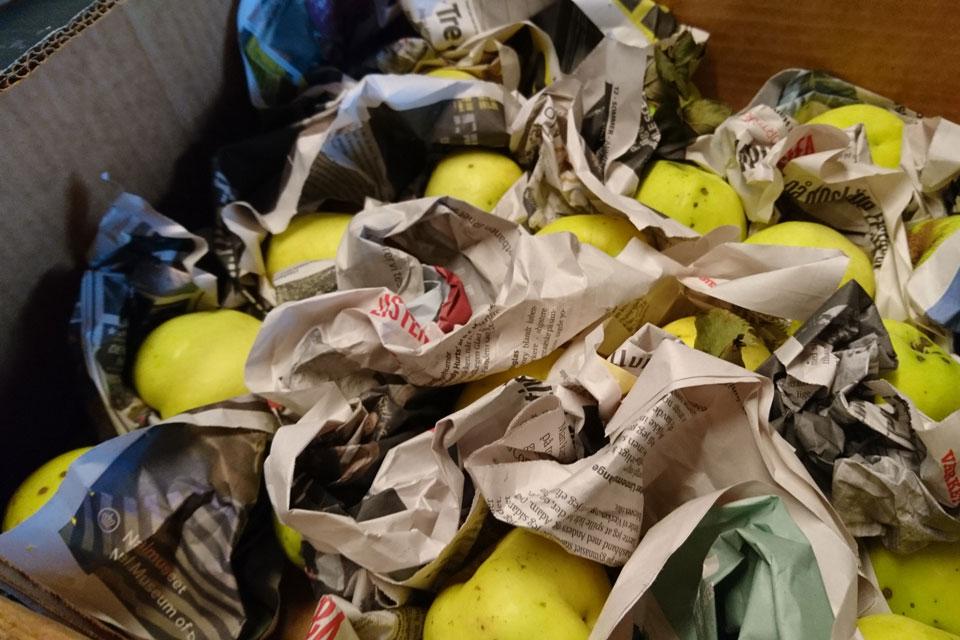 Яблоки сорта Филиппа хранятся в неотапливаемой пристройке дома