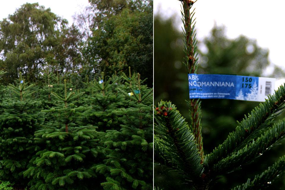 Датские елки или елочный бизнес в Дании. www.florapassionis.com