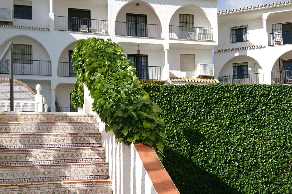 Зеленые стены и ограды из вечнозеленого плюща