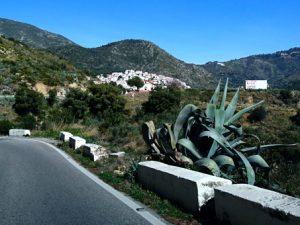 Растения в горах на юге Испании