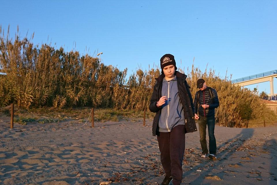Арундо тростниковый(Arundo donax L.)