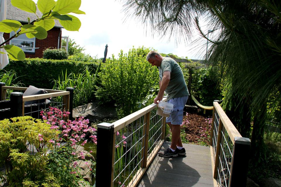 Хозяин сада Пэлле с мостика наблюдает за своими ручными карпами