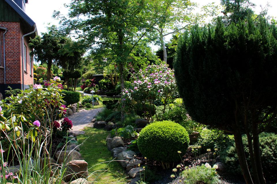 В мае месяце в саду Сусанне Расмуссен множество цветущих рододендронов