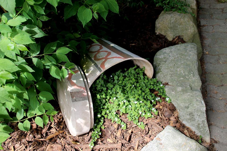 Необычный контейнер для растения бакопа из вазы, которая не стоит, а лежит на клумбе.