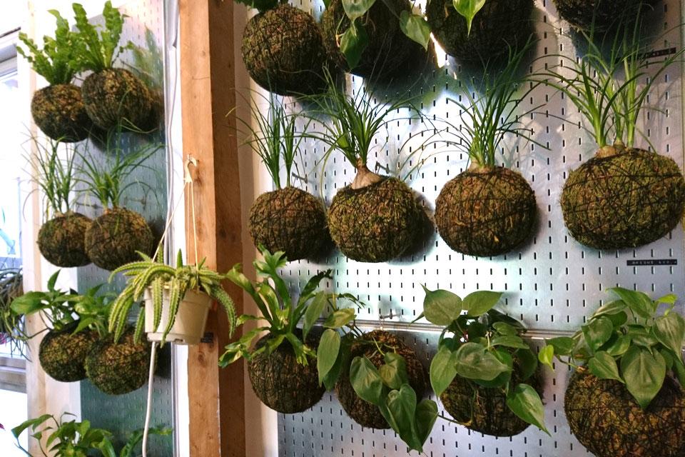 Висячие растения в подвесных шарообразных кашпо