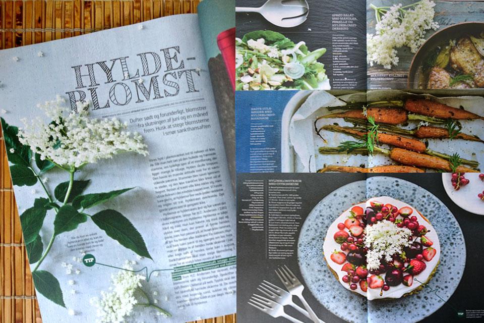 Рецепты из цветков бузины черной в журнале