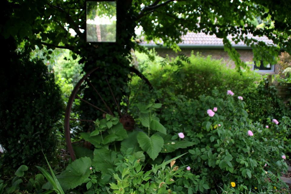Дикий уголок нетронутой природы в саду Йорк