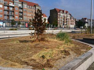 Лето 2018 в Дании – жара и засуха