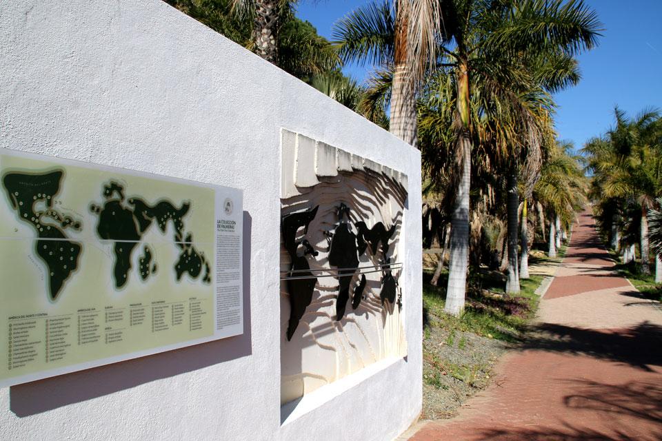 Коллекция пальм со всего света в ботаническом саду Ла Консепсьон