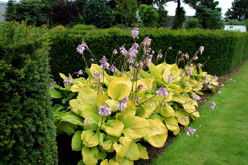 Сад многолетних цветов Харлев staudeblomsten have Harlev