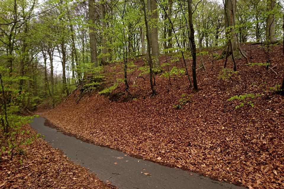 маршрут маргариток проходит через живописных буковый лес.