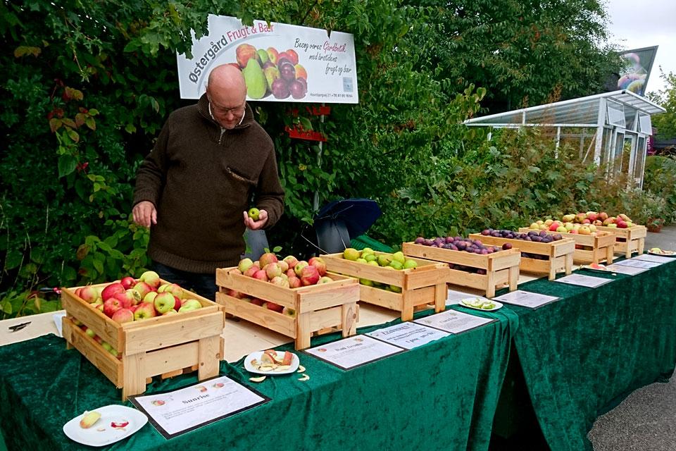 Сорта яблок в Дании