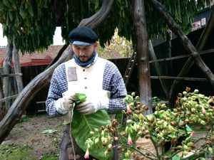 Табачное производство в старые времена в Дании