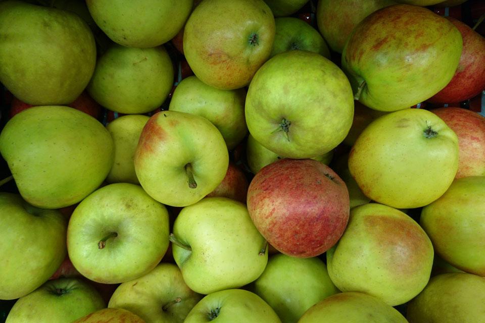 Сорта яблок в магазинах Дании: Эльстар - ElStar.
