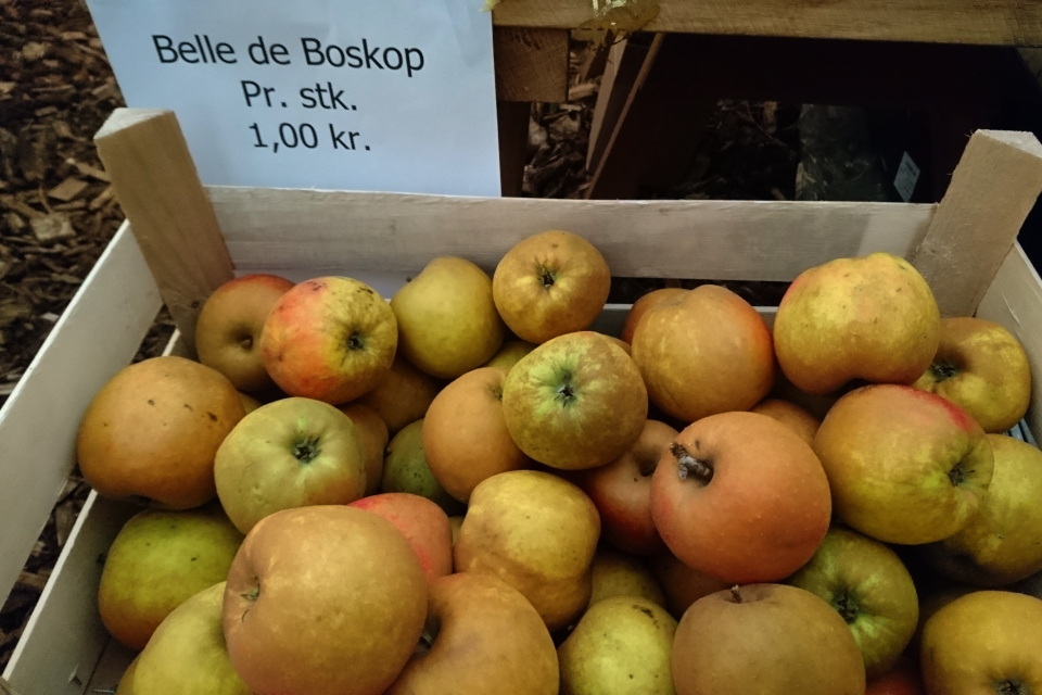 Яблоки сорт Белле де Боскоп (Belle de Boskoop) желтой окраски