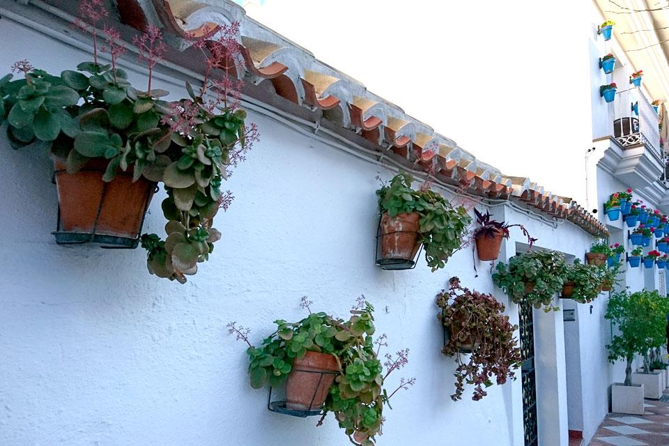 Цветущие каланхоэ и традесканции украшает белоснежную стену здания