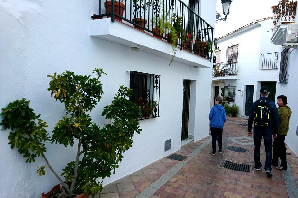 Шеффлера Древовидная (Schefflera arboricola) возле стены