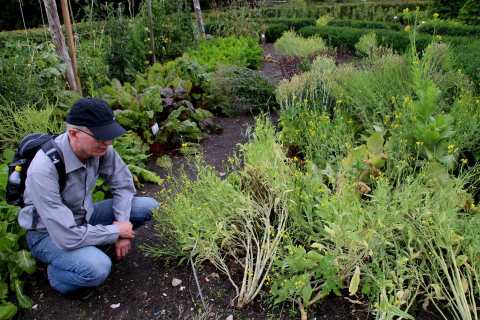 Старые сорта овощей на огородах поместья Гаммель Эструп / Gammel Estrup