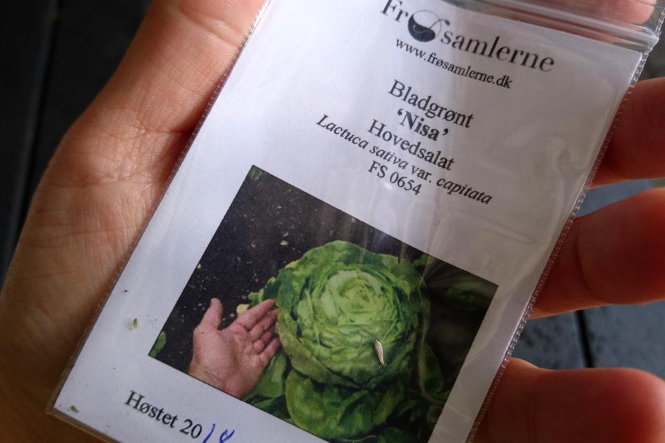 Семена старого датского сорта салата 'Nisa',найденные в коллекции Вавилова