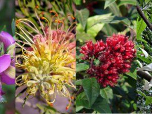 Цветущие деревья и кустарники в ботаническом саду Ла Консепсьон