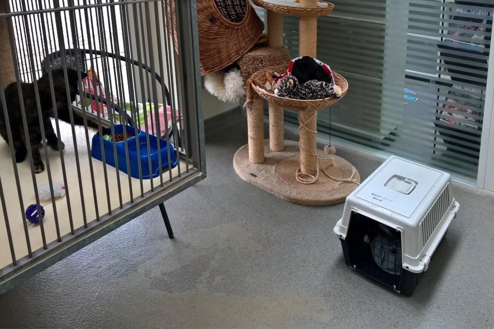 Переноска для кошек в приюте