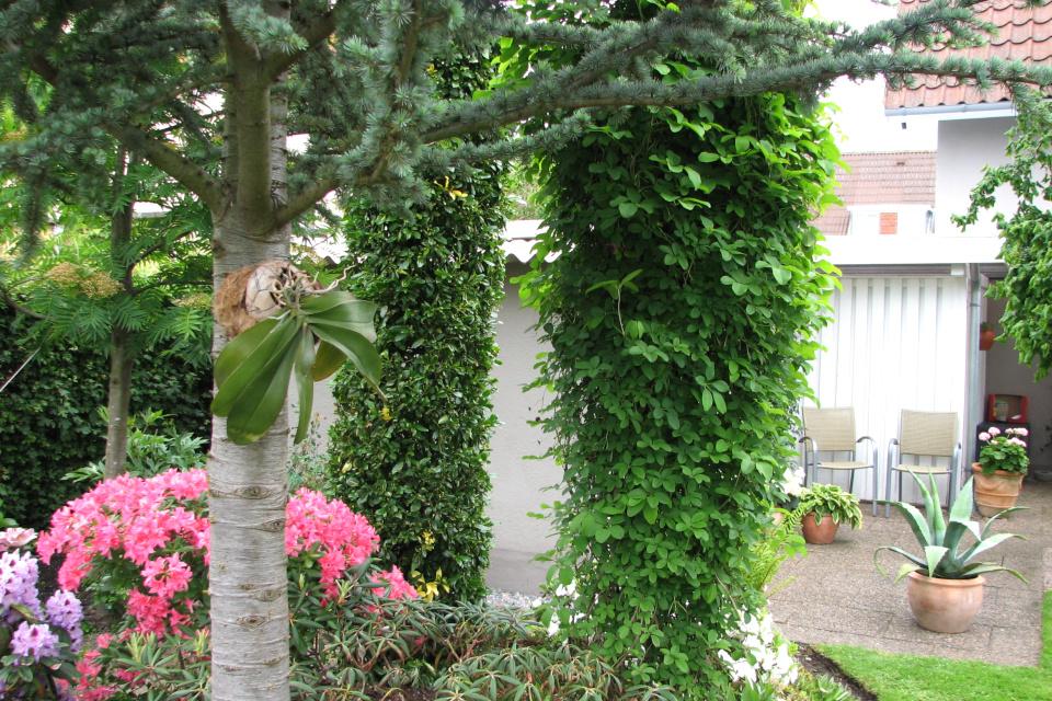 Орхидея в саду рододендронов