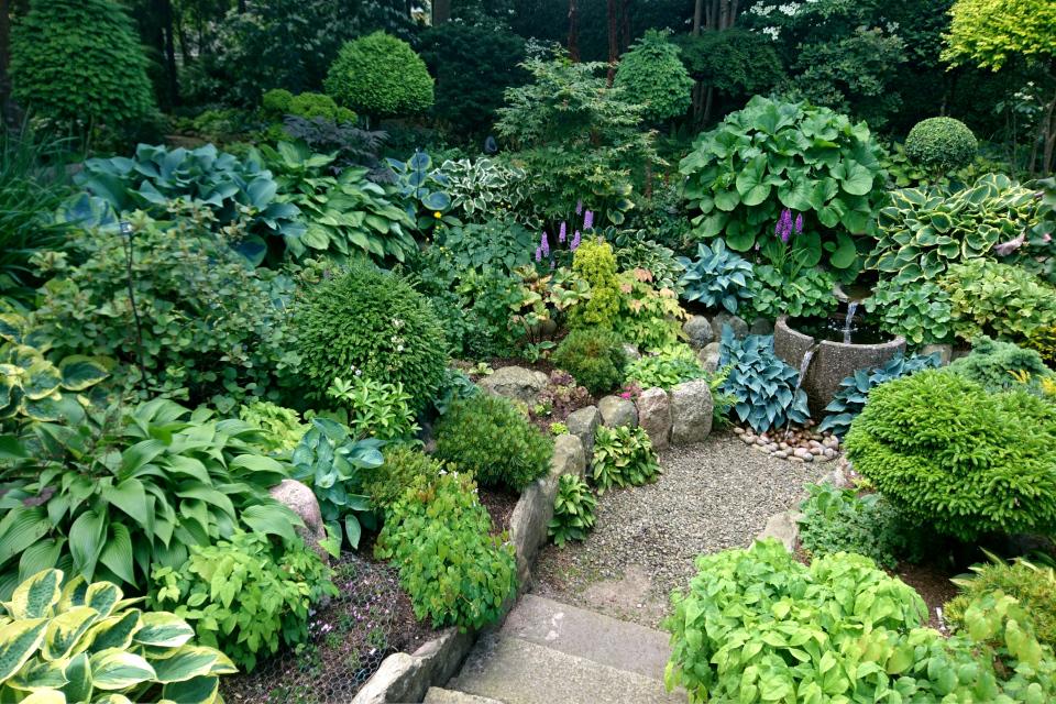 Коллекция хост и других декоративных растений