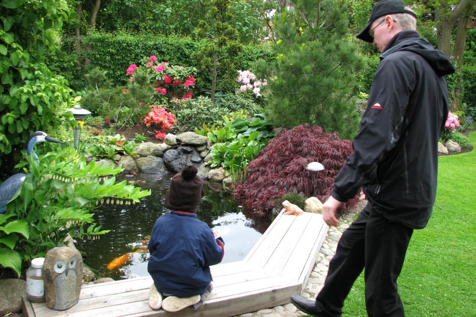 Разноцветные рыбы в пруду приковали внимание моего сына