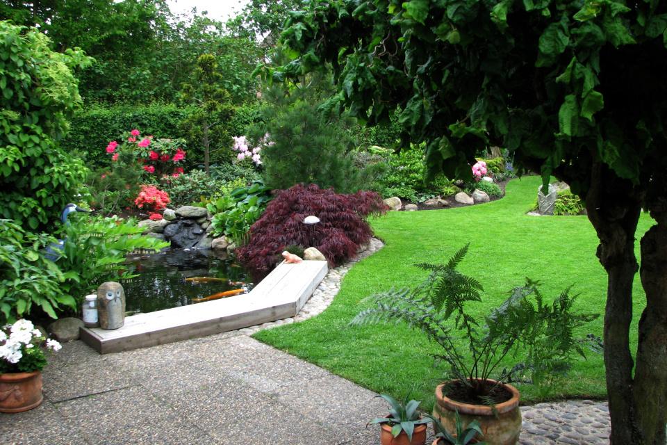 Пруд с карпами возле дома в саду рододендронов