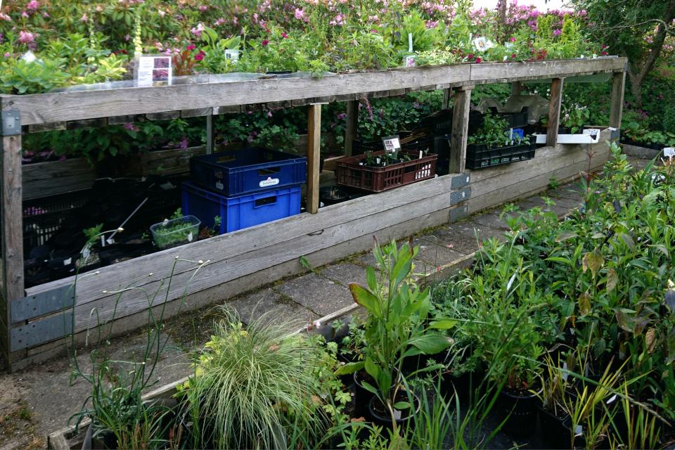Самодельные стеллажи для рассады растений, сад Либерия