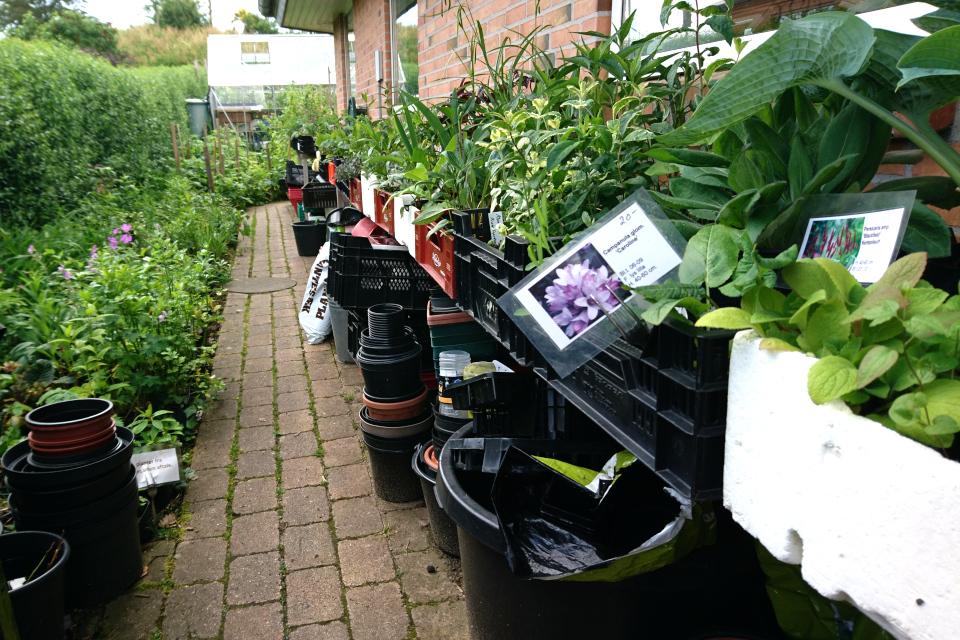 Рассада растений, которую Эльзе и Карл выращивают для продажи