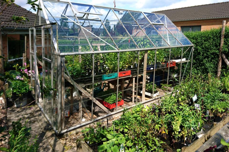 Теплица и стеллажи с рассадой в саду Либерия