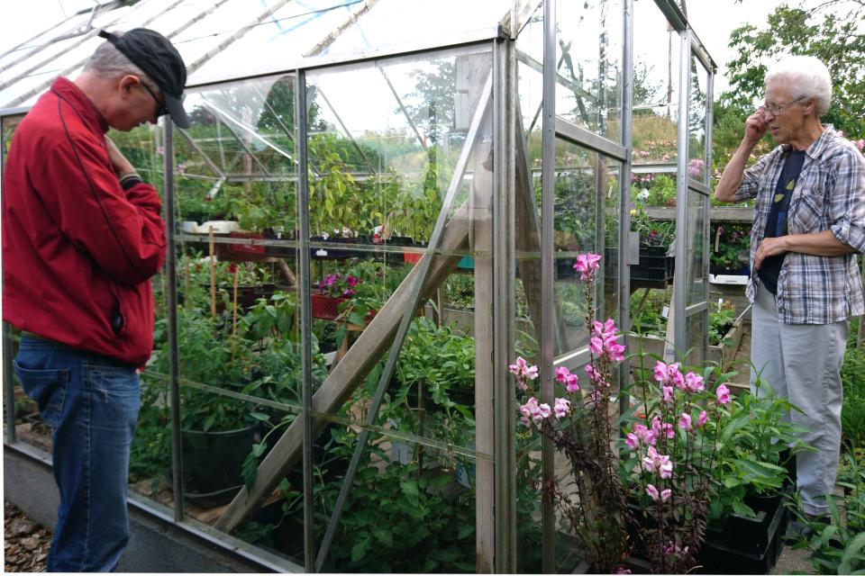 Возле теплицы с помидорами, где растут различные сорта помидор