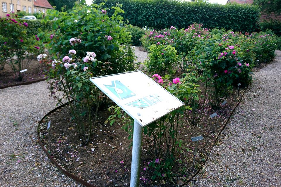 Табличка с планом сада исторических роз возле городского музея Фредерисия, Дания