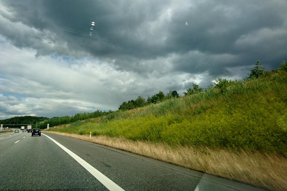 Пастернак посевной растет возле шоссе, г Скандерборг / Skanderborg, Дания