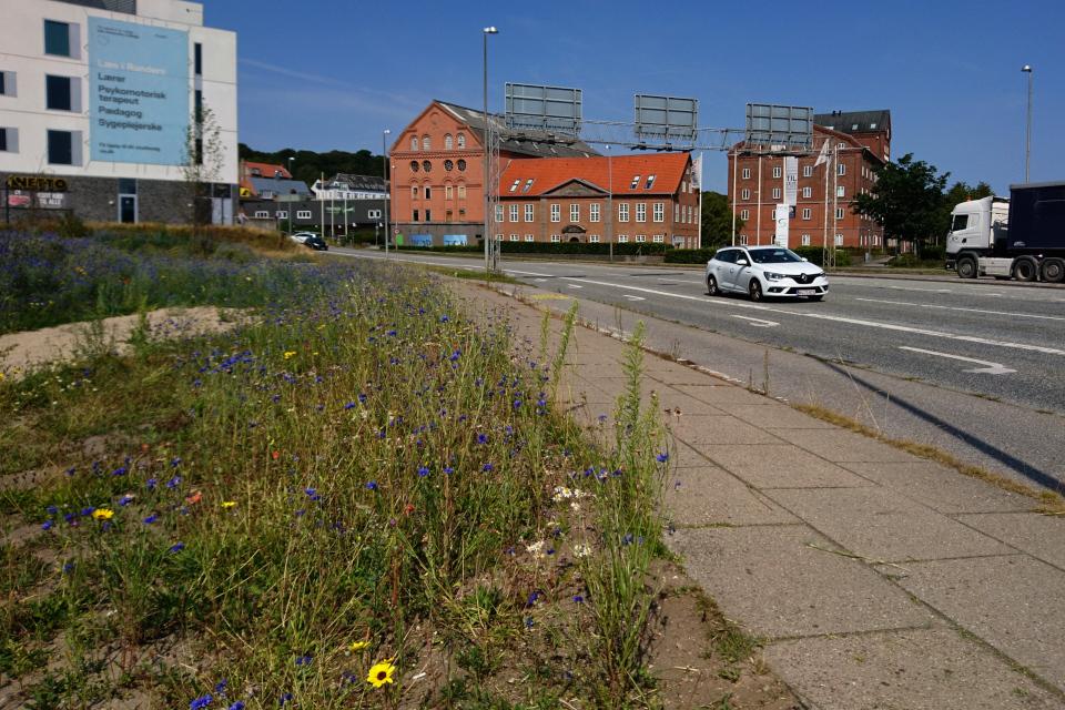 Дорога возле площади с васильковыми холмами в г. Рандерс / Randers, Дания.