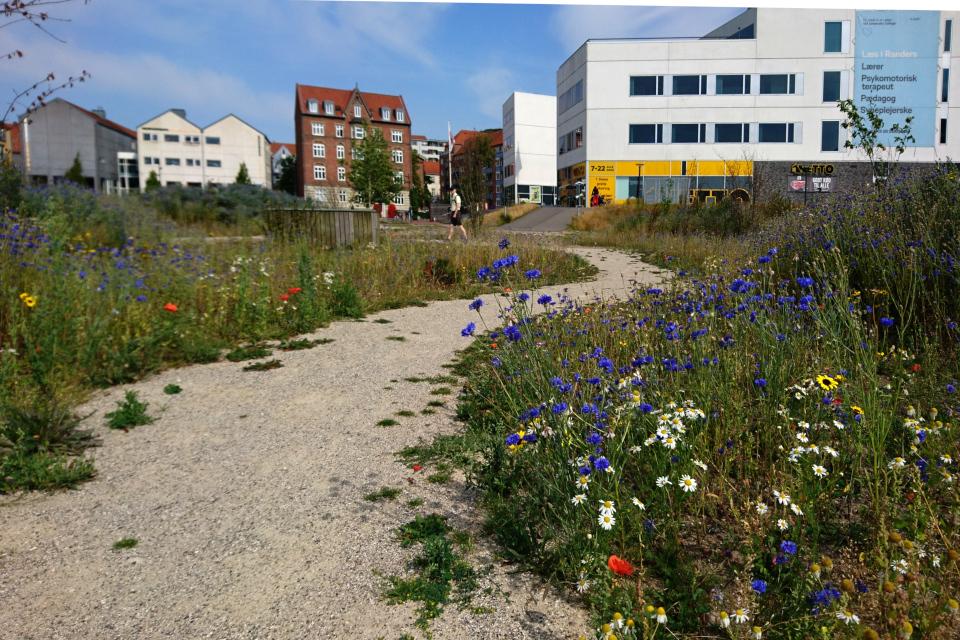 Васильки и ромашки на месте бывшей парковки, Дания