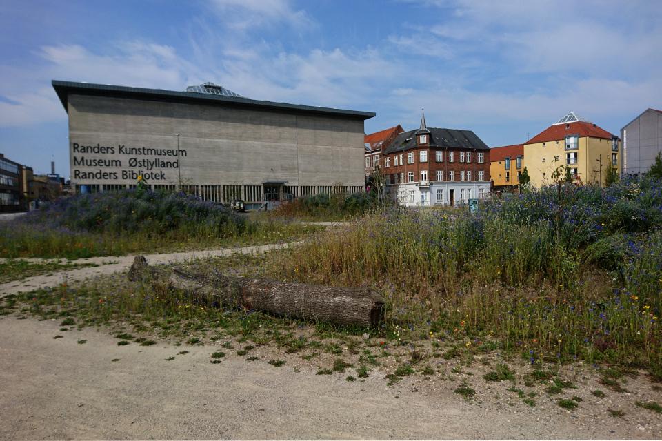 Васильковые холмы в городе Рандерс возле здания музея и библиотеки, Дания