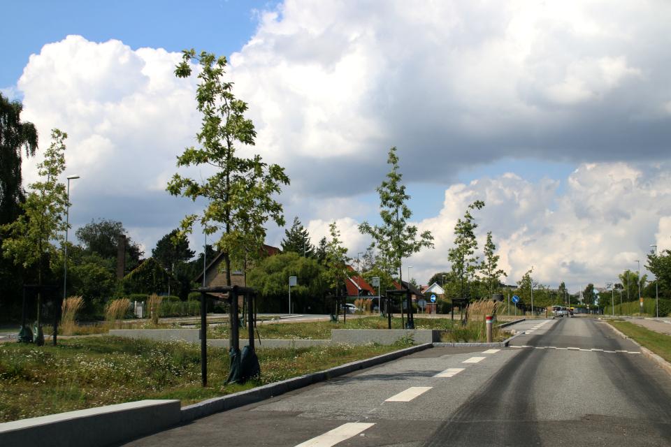 Обновленная аллея Risvangs Allé в г. Орхус, Дания. Фото 3 авр. 2019