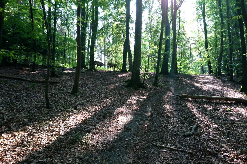 Мифические волки в лесу Мосгорд / Moesgaard, г. Хойбьяу / Højbjerg, Дания