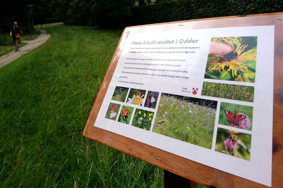 Табличка с объяснением нового тренда по озеленению городов- биодиверситет
