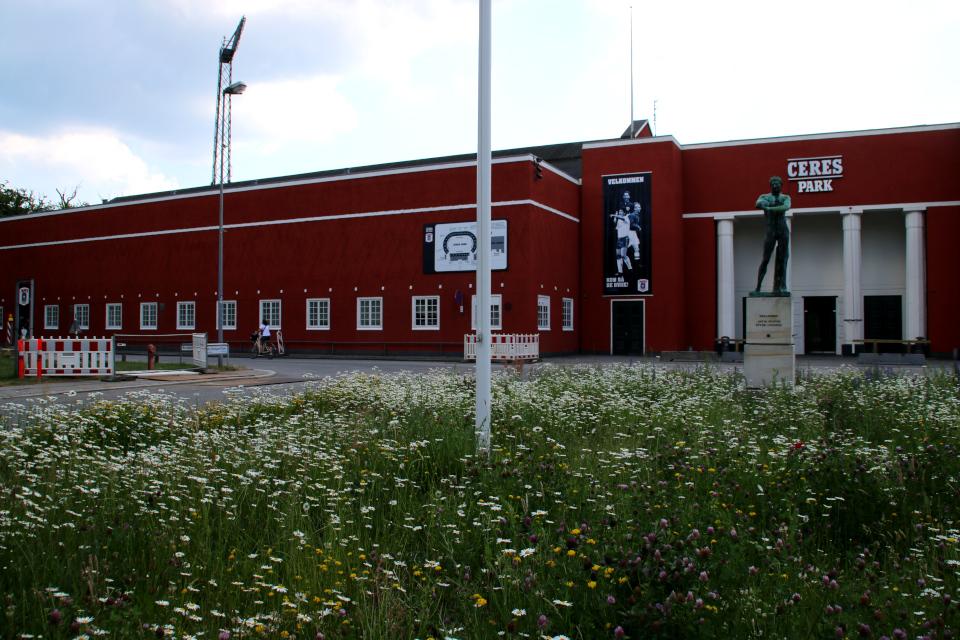 Растения дикой флоры Дании - ромашки, клевер и одуванчики на клумбе