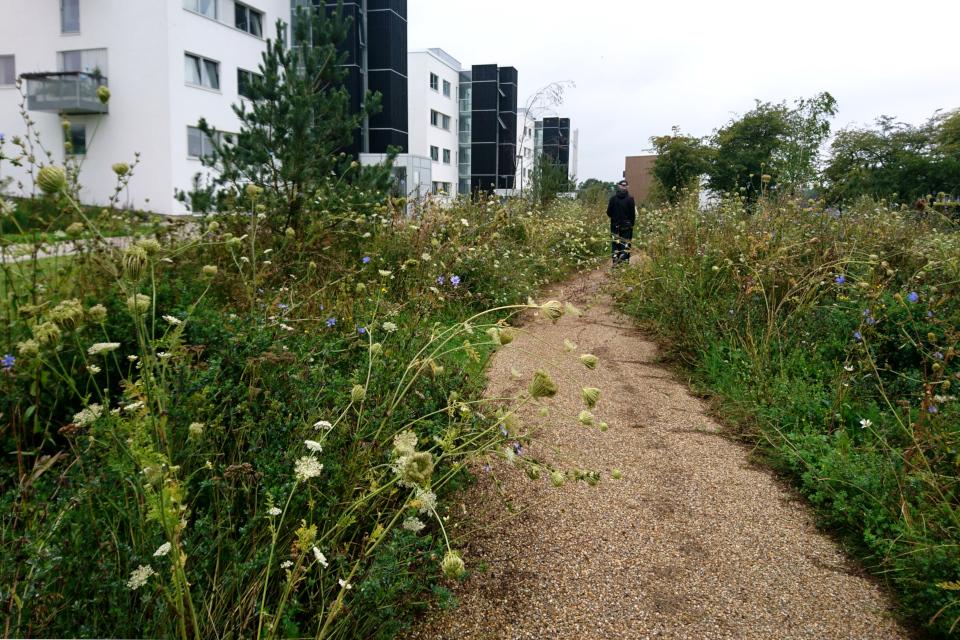 Клумбы с дикими растениями в жилищном комплексе Rosenhøj, г. Орхус / Aarhus, Дания.