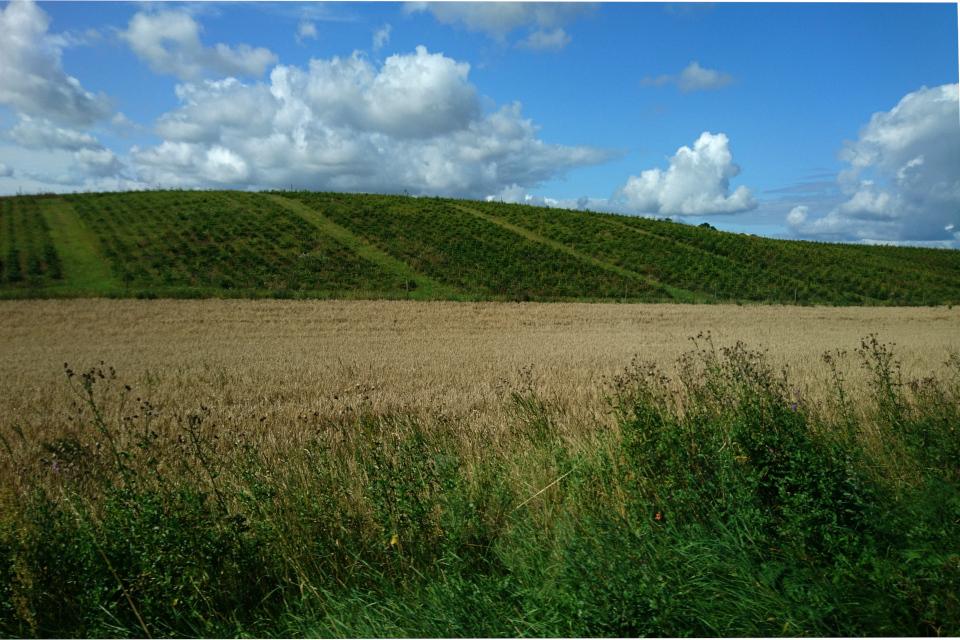 Пшеничные поля и плантации рождественских елок по дороге к могиле Гамлета