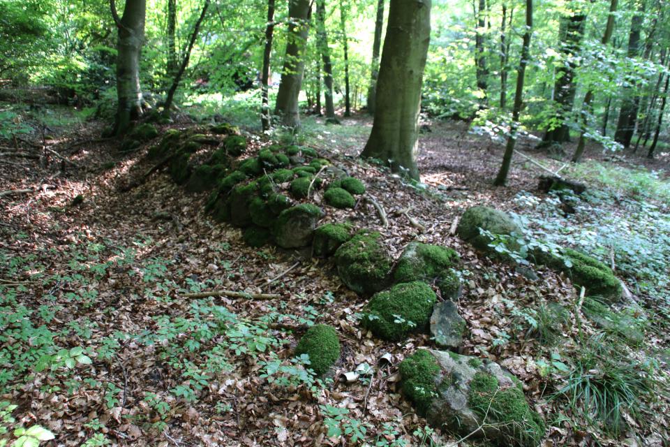 Каменные ограждения территории леса (дат. stendige), поросшие мхом
