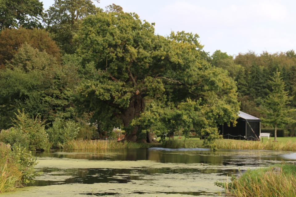 """У лукоморья дуб зеленый"" - старый дуб около озера с замком Боллер (Boller slot)"