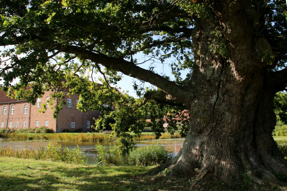 "Замок Боллер (Boller slot) посреди озера и старый дуб ""Кристиан IV"""